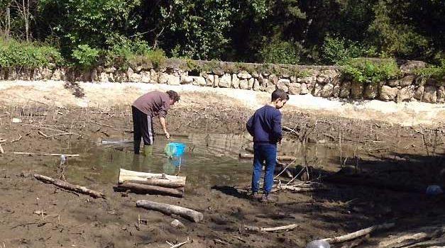 Villa Ada: pesci in agonia